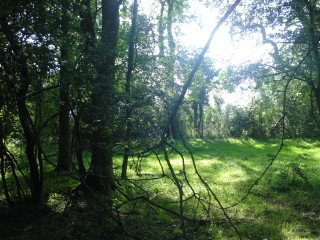 The Ickleford Common | By Tilly B