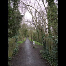 The trackbed with 'Ebury Way' marker, and a surviving telegraph pole. March 2010. | © St Albans Museums