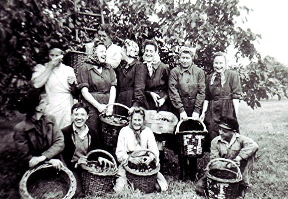 Russell Harborough fruit pickers | Geoff Webb
