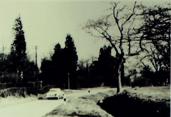 Goffs Lane, 1959
