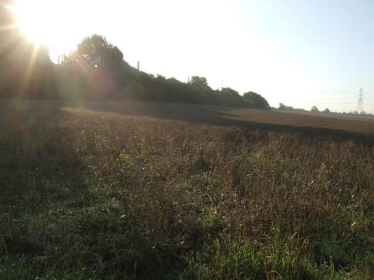 Oafield Meadows