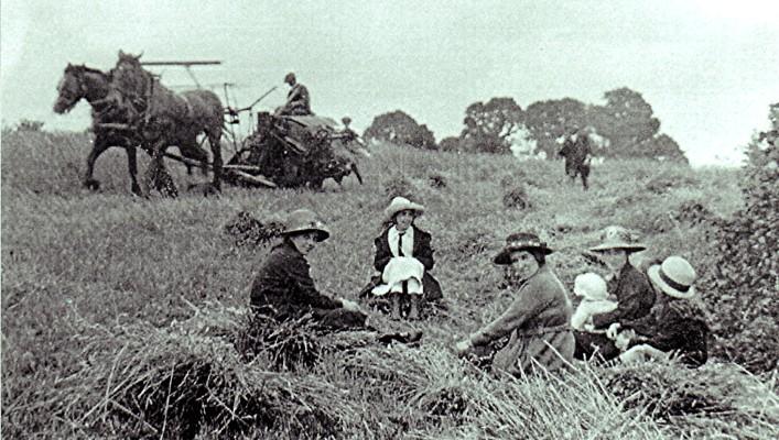 Old harvest field scene | Geoff Webb
