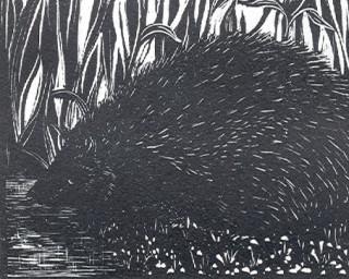 Hedgehog | Catherine Davis