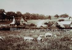 Hemel Hempstead Lane