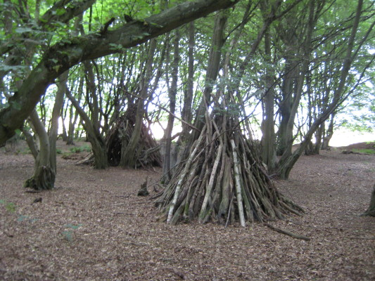Home Wood, Knebworth