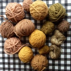 Yarns dyed with Sanderswood, Chamomile, Onion Skins and Walnut Leaves