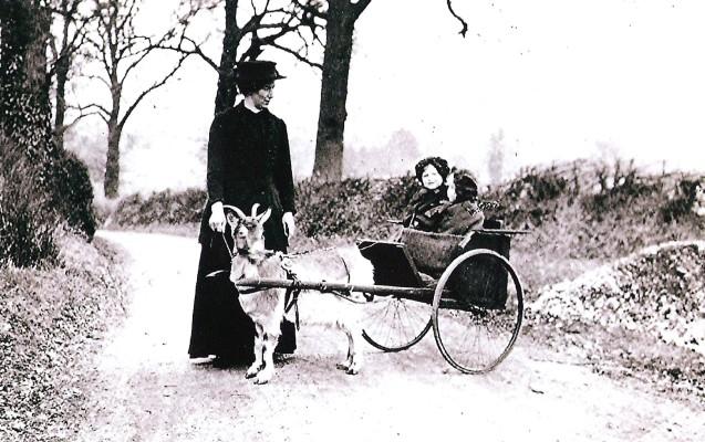 The Minnis Sisters   Geoff Webb