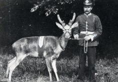 The Hertfordshire Militia