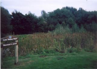 Norman's Pond | Alan Fox