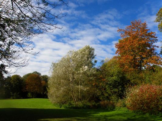 Autumnal colour   Mike Alcock 2010