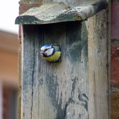 Just popping out to get the lunch ... | Mike Alcock 2011