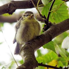Free as a bird! Now where's my tea? | Mike Alcock 2011