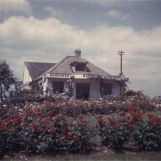 Harkness Roses, 1962 | First Garden City Heritage Museum