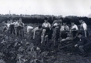 Boys from Pixmore School growing vegetables for the War Effort | First Garden City Heritage Museum
