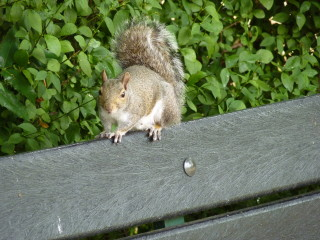 A squirrel calculates its next move. If it knew it was so cute, it might not be so scared. | © Richard Brockbank 2010