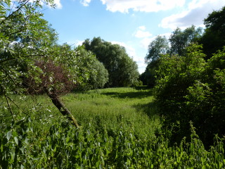 Rushy Mead Nature Reserve is usually quiet. | © Richard Brockbank 2010