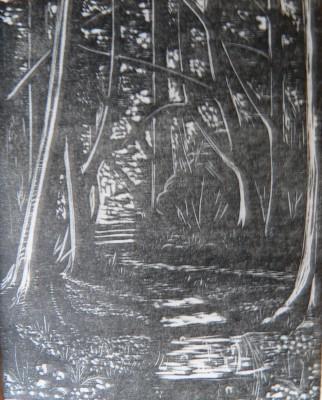 Lady Walk Wood by Dorothy Haigh