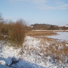 The Nature Reserve   I Fisher