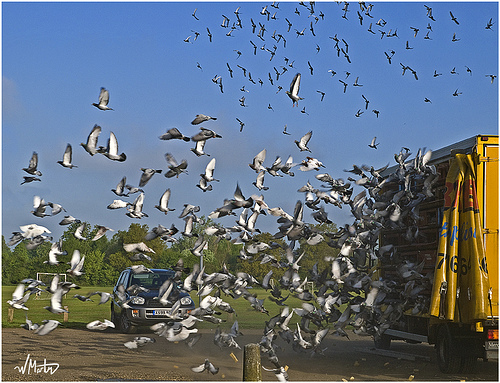 Pigeon Liberation | Bill Martin