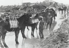 Hertfordshire War Horses