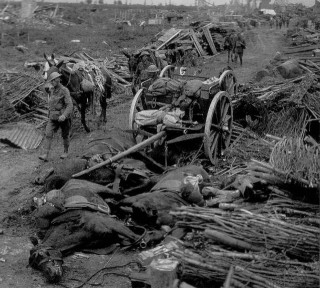 Horses killed in action on the Western Front