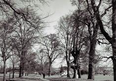 The Avenue of Elms