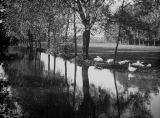 River Lea, Hartham Common, Hertford | Hertfordshire Archives & Local Studies