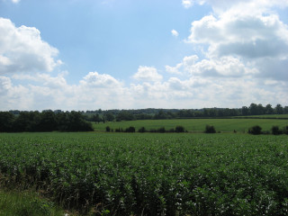 View across the fields from Robbery Bottom