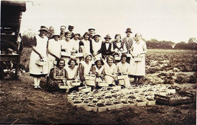Skillman's Strawberry Pickers   Geoff Webb