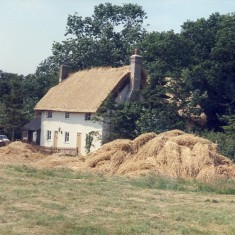 Thatching at Moor Green | I.Fisher