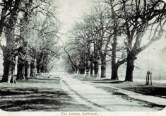 The Avenue, 1900