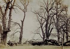 The Avenue, 1926