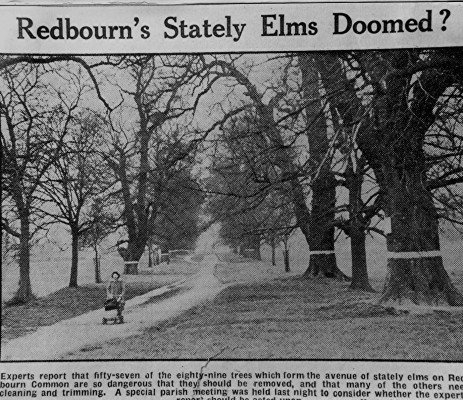 Dutch elm disease epidemic | Geoff Webb