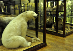 Tring Zoological Museum