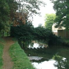 A derelict bridge in turnford, looking upstream | Nicholas Blatchley