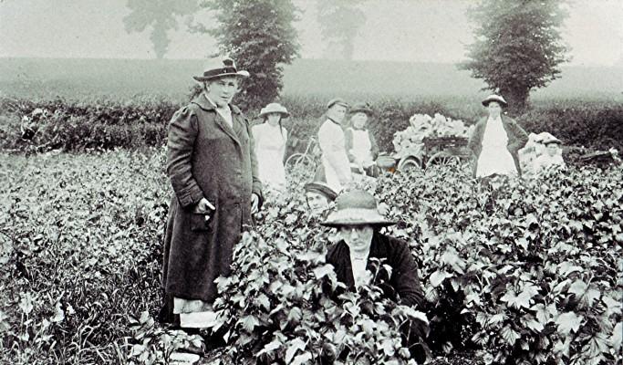 Working in Skillman's fruit fields